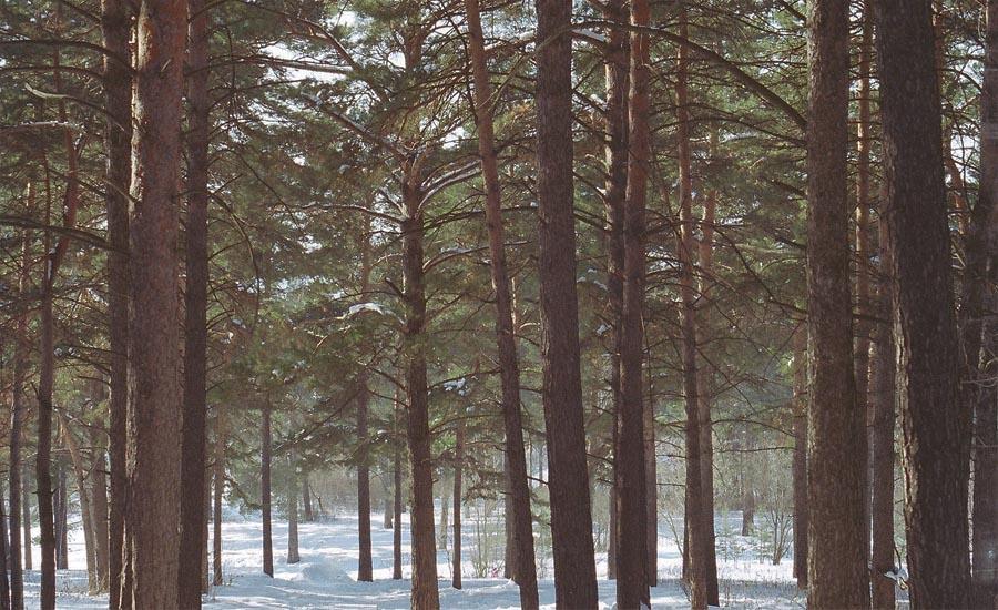 Рассказ «Лес»