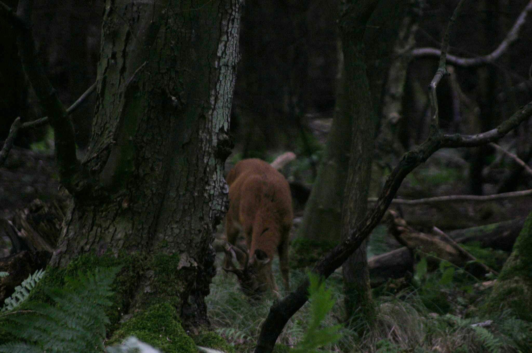 Одержимость дочери охотника
